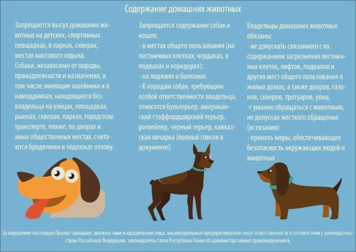 содержание животных